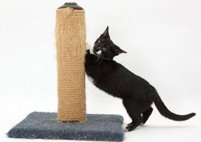 Как приучить взрослого кота или котенка к когтеточке в квартире | lisa.ru