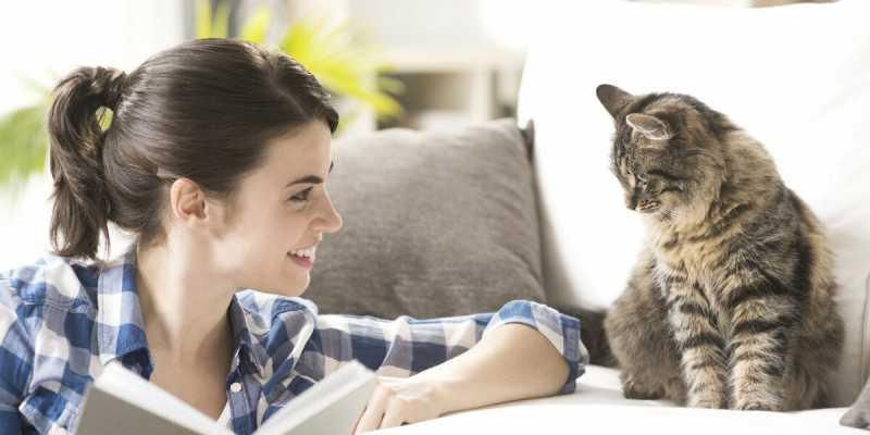 Понимают ли кошки человеческую речь? могут ли коты понять, что люди с ними разговаривают и ругают их?