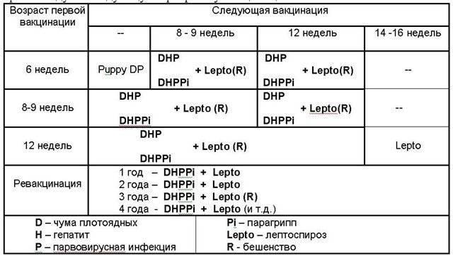 Календарь прививок щенка немецкой овчарки по возрасту (таблица и график), когда делать первую вакцинацию