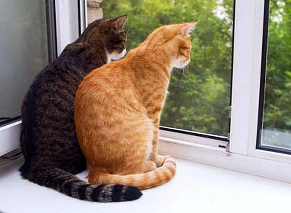 Скучают ли кошки по хозяевам в разлуке | ключи от счастья: здоровье, красота, семья