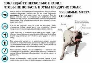 Чего боятся собаки — собачьи страхи — откуда они берутся, что делать