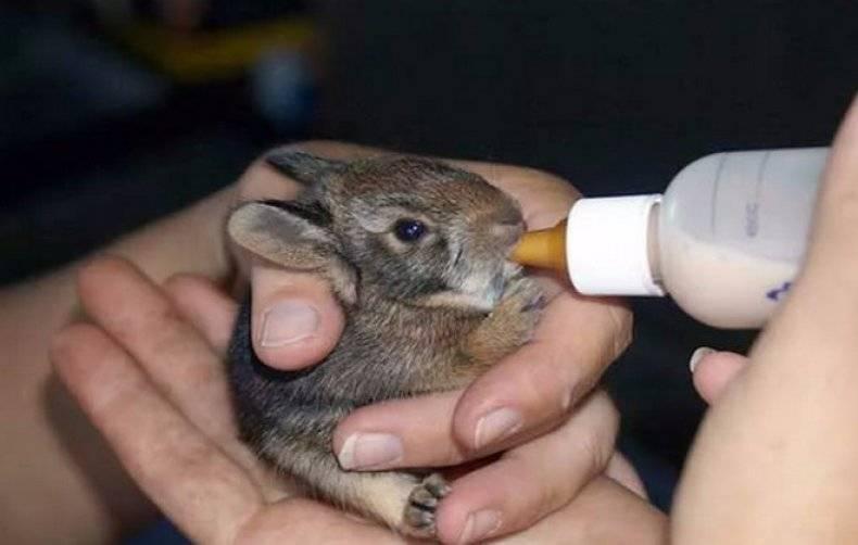 Сколько комбикорма съедает кролик в день: суточная норма от рождения до забоя