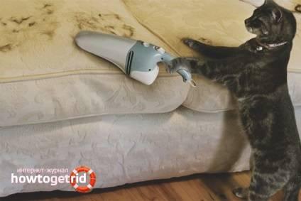 Чем вычесывать кошку: пуходерка, варежка, фурминатор