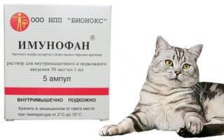 Азинокс для кошек: инструкция по применению