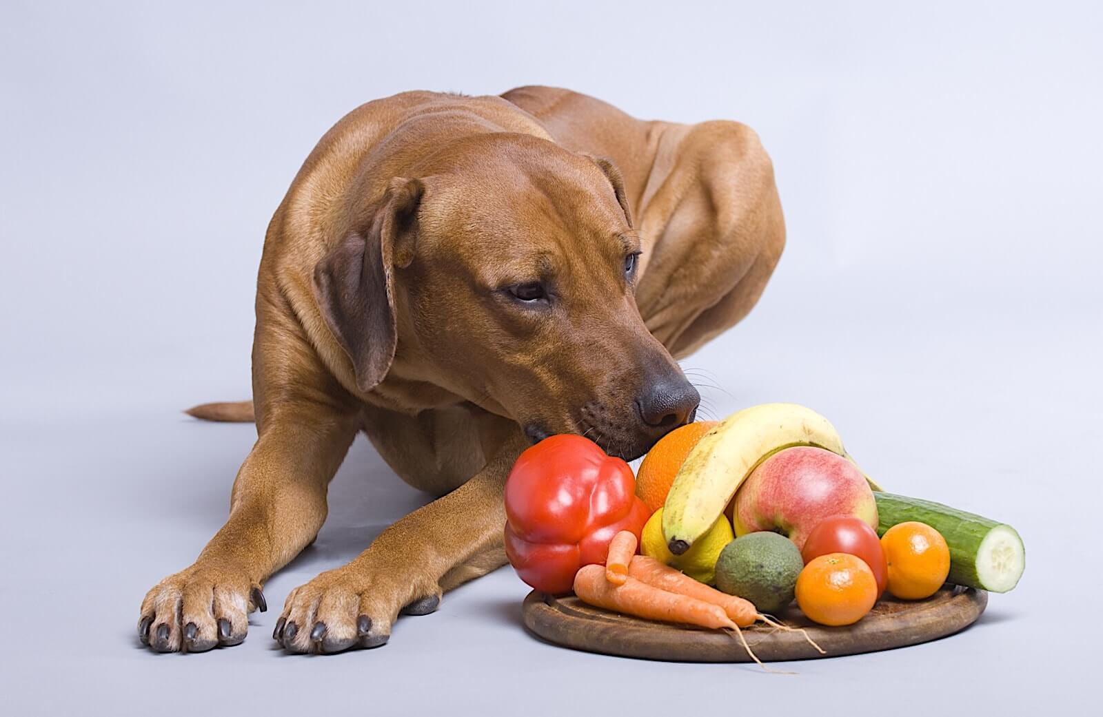 Почему собакам нельзя свинину | можно ли