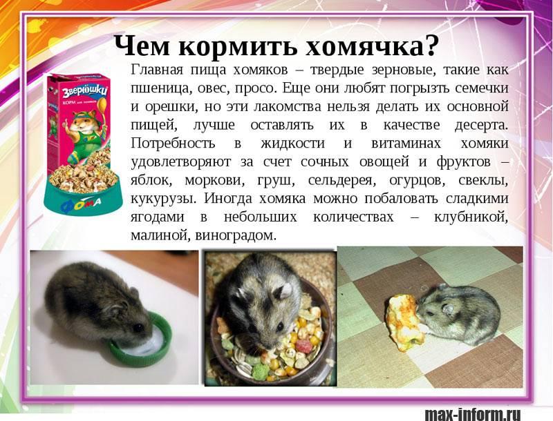Чем кормить ласку в домашних условиях | русский спаниель