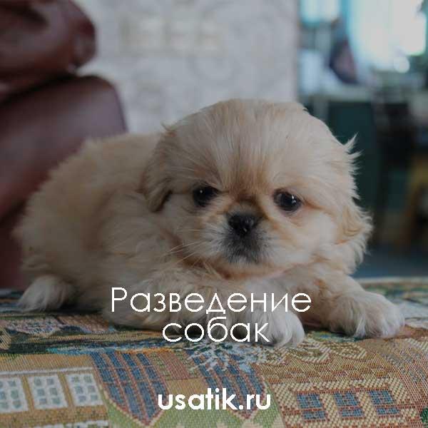 Топ 10 пород самых дорогих собак в мире