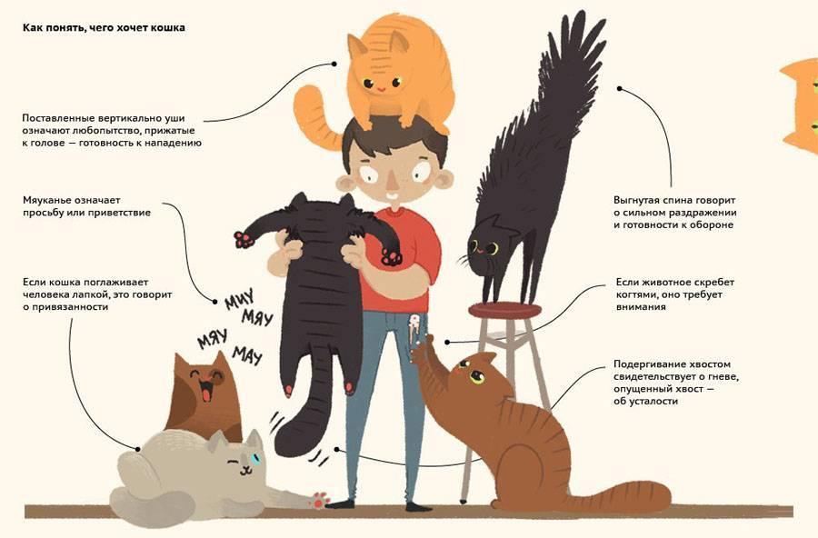Узнайте 9 вещей, которые не любит ваша кошка!