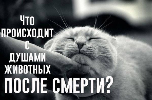 Что происходит с душами животных после их смерти? :: инфониак