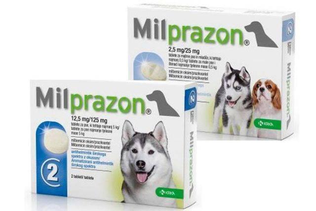 """""""милпразон"""" для кошек: отзывы ветеринаров, инструкция по применению и отзывы"""