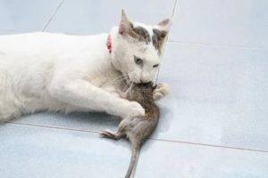 Какие кошки ловят мышей лучше других