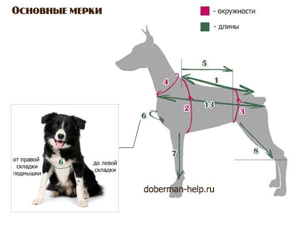Разновидности одежды для маленькой собаки, правила выбора