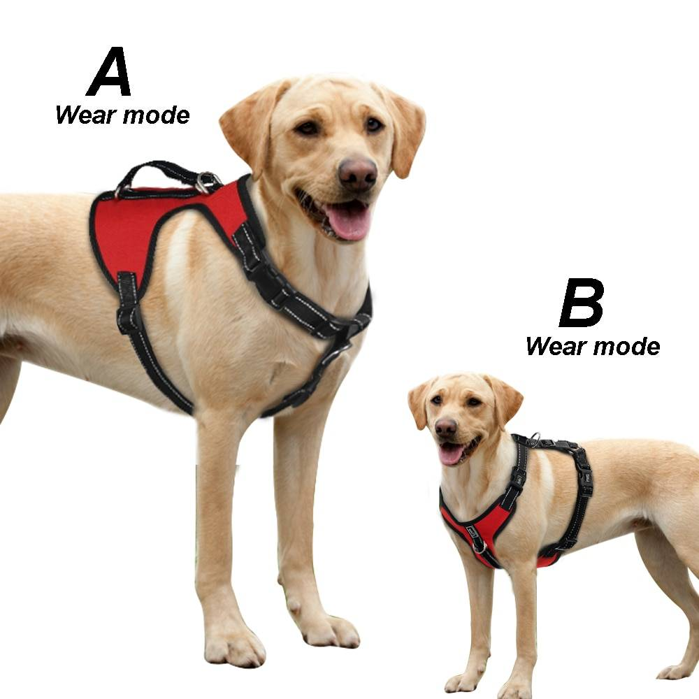 Пошаговая инструкция, которая поможет правильно одевать шлейку собаке