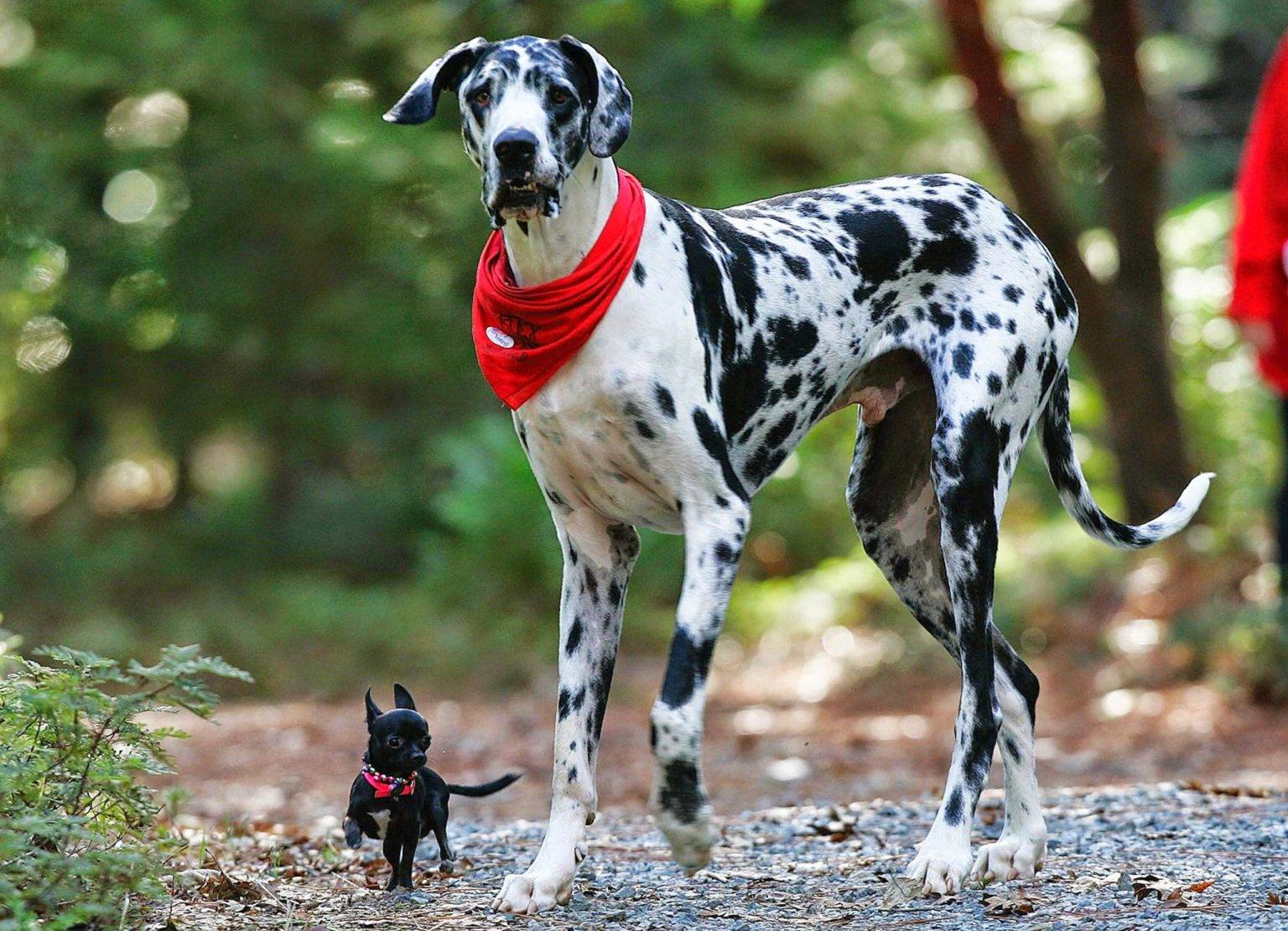 Лучшие породы собак-компаньонов
