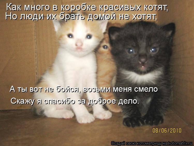 Дружба кошки и котёнка: примеры разных возрастов, примирение к чужому