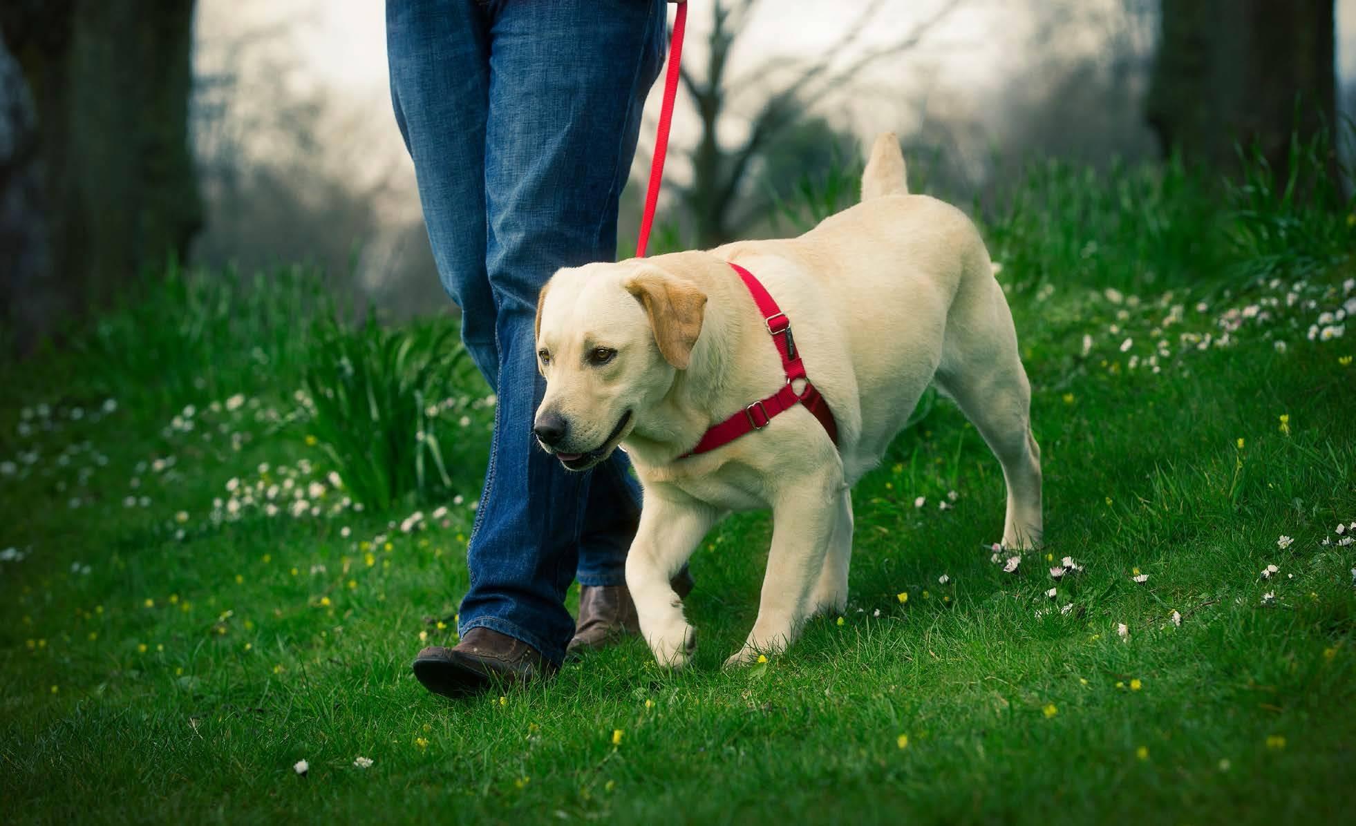 Как дрессировать щенка правильно в домашних условиях