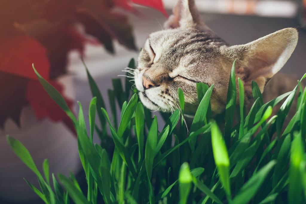 7 причин: кошки обожают вашу голову