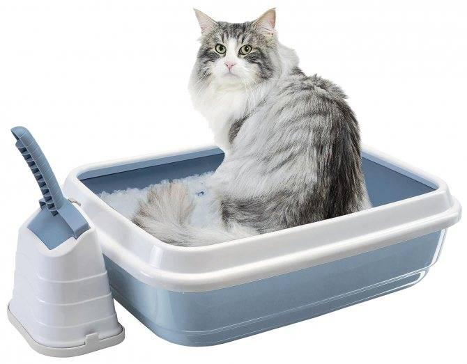 Приучить котенка к лотку — легко и просто