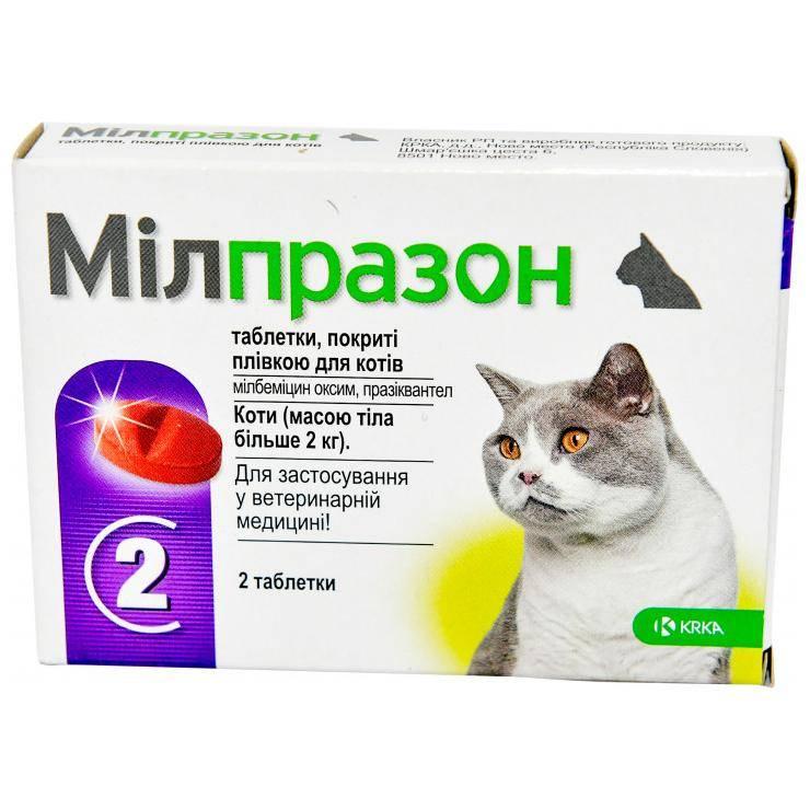 Какое обезболивающее для кота при переломе