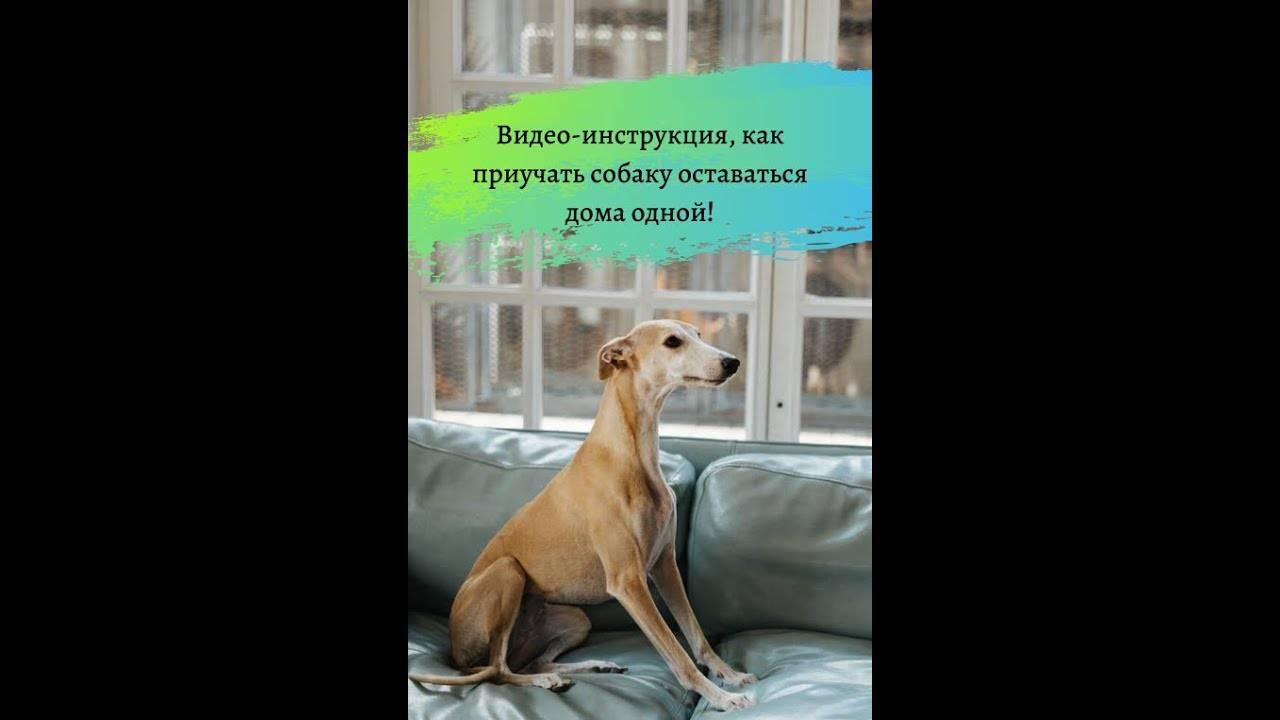Все о любимых собаках