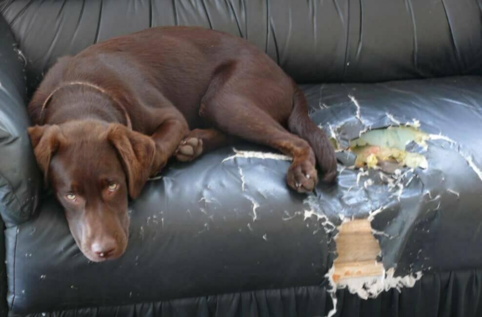 Почему собаки слипаются при спаривании — что делать