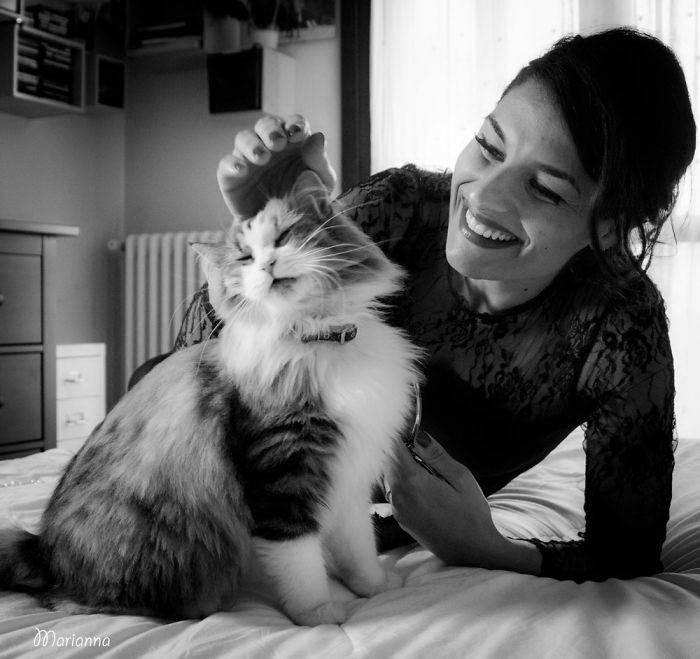 5 признаков, что ваша кошка счастлива и довольна жизнью   gafki.ru   яндекс дзен