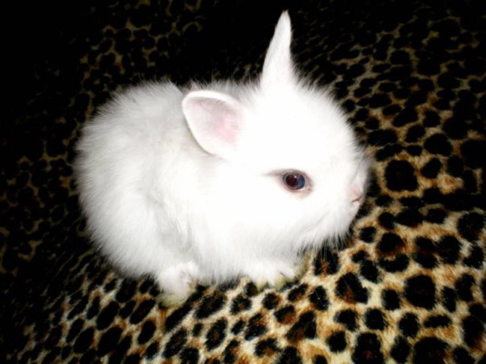 Как назвать кролика: имена для девочек, клички для декоративных мальчиков