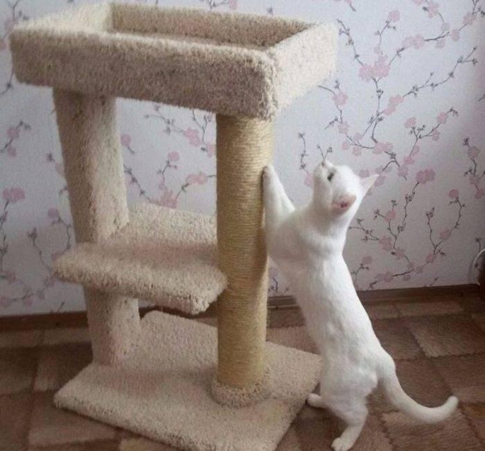 Правильная когтеточка своими руками для кошки: конструкция и типы, материалы, сборка