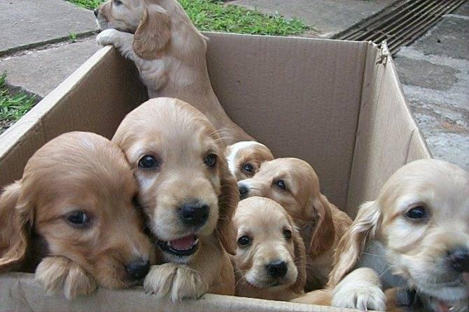 Когда собака оправится от потери щенков: советы по разлучению