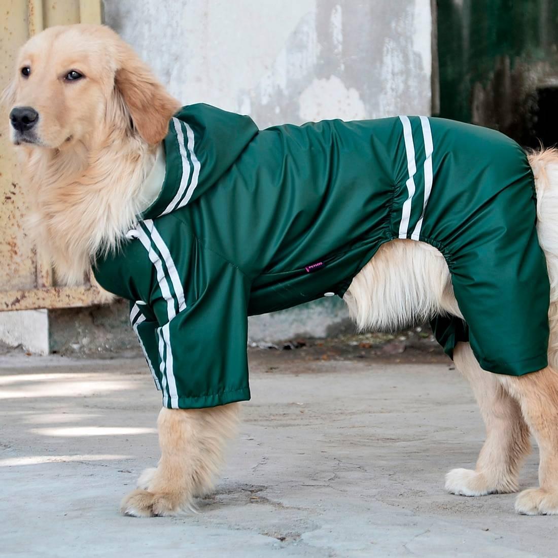Топ-29 спокойных пород собак