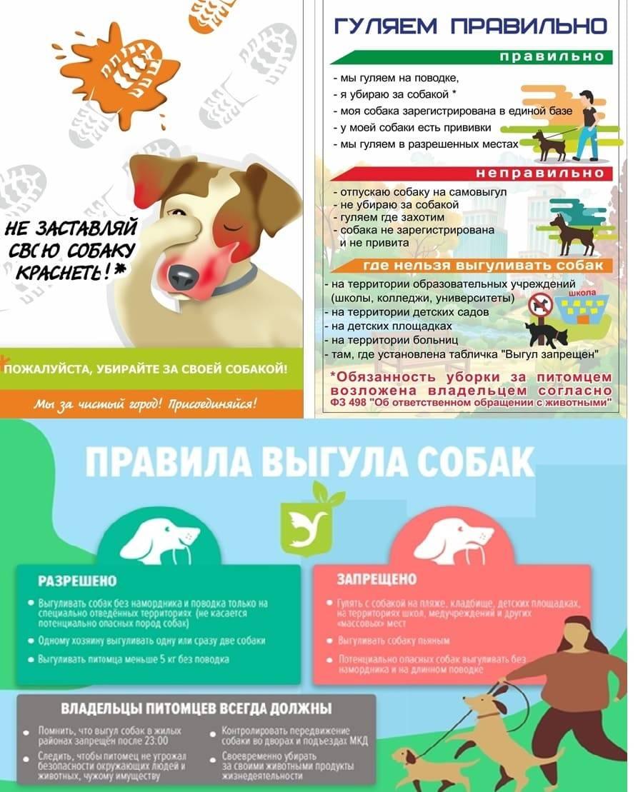Закон о содержании собак в частном или многоквартирном доме: законы и нормы