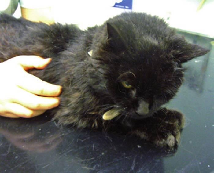 Инсульт у кошек и котов: симптомы и лечение - oozoo.ru