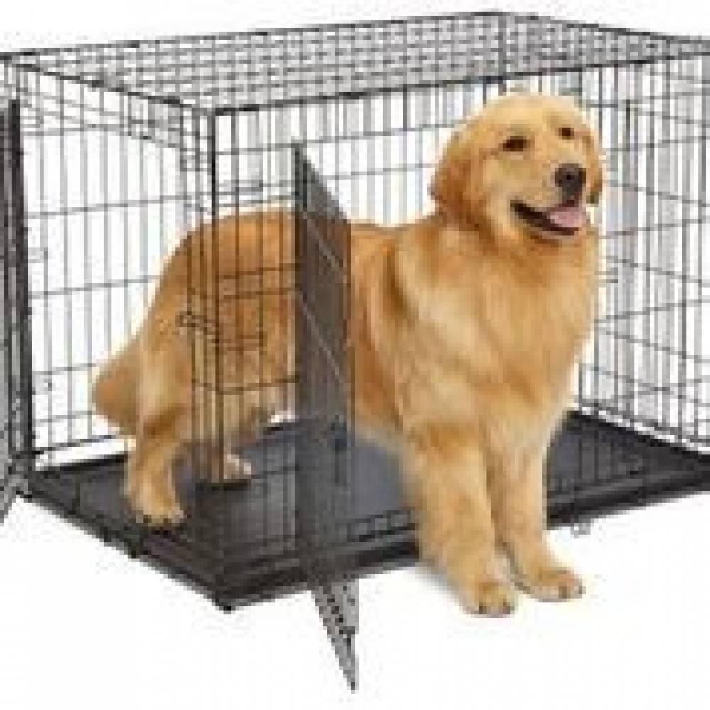 Лежанки для собак: особенности и правила выбора