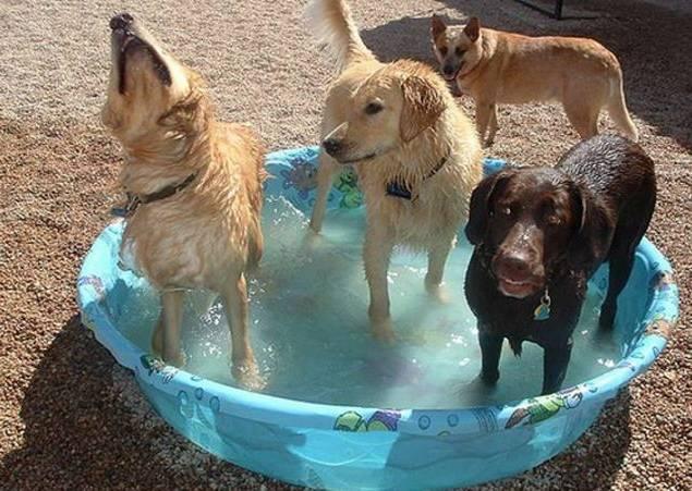 Как можно помочь собаке в жару