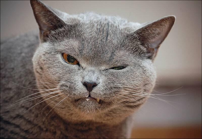 Память у кошек и котов: как долго питомцы помнят что-либо, могут ли развивать этот навык, какие особенности запоминания имеют
