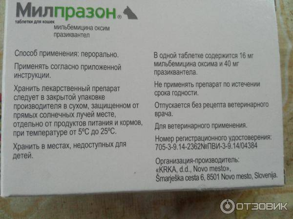 Как правильно применять препарат милпразон для кошки: обзор инструкции