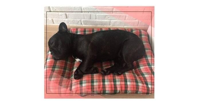 Как отучить собаку спать на кровати, прыгать на диван
