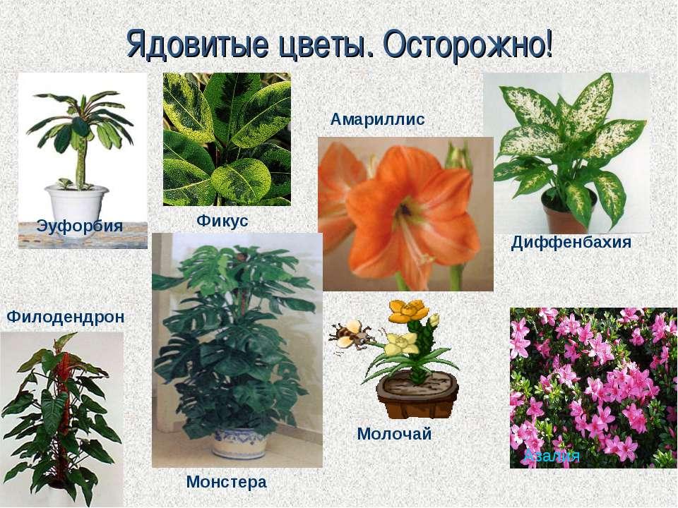 Вредные ядовитые комнатные растения и цветы для кошек