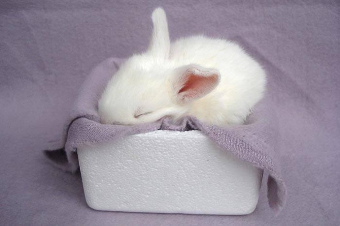 Как спят кролики: сколько и как часто, особенности сна