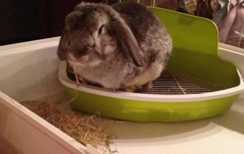 Как приучить кролика к лотку: способы — selok.info