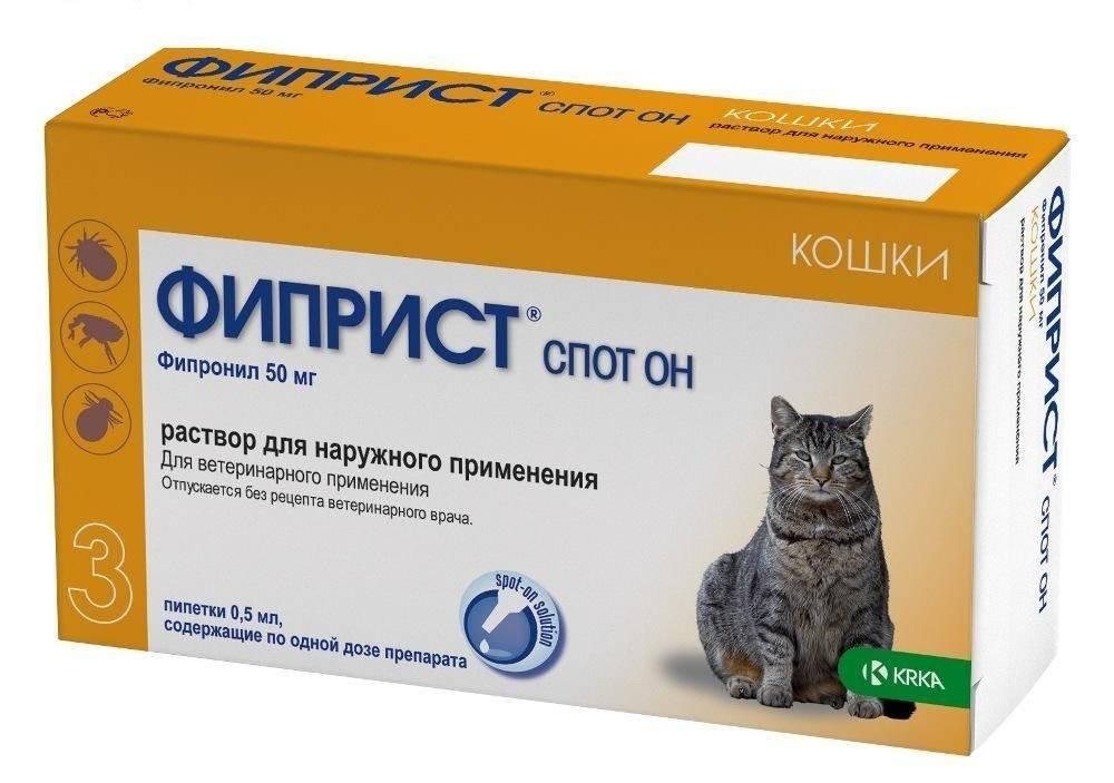 Блохи у кошек: как вывести народными средствами, средства от блох