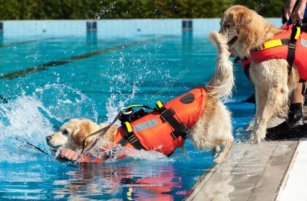 6 пород собак, которые всегда придут вам на помощь и спасут вашу жизнь