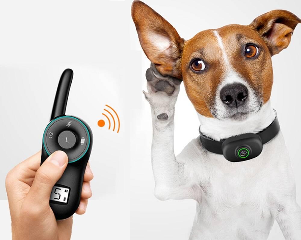 Ошейник для собак с электрошоком для дрессировки