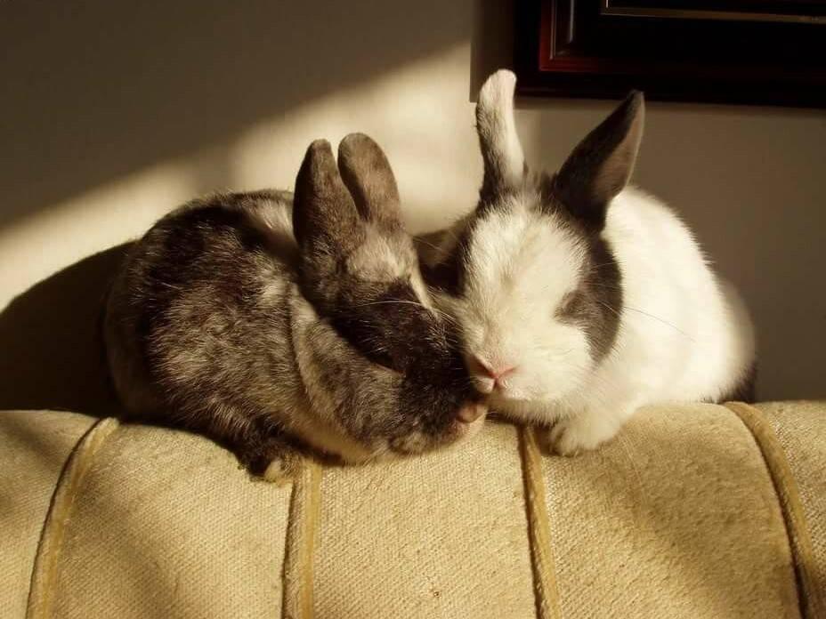 Как спят декоративные кролики: сколько, когда, с открытыми глазами или нет, спят ли кролики ночью
