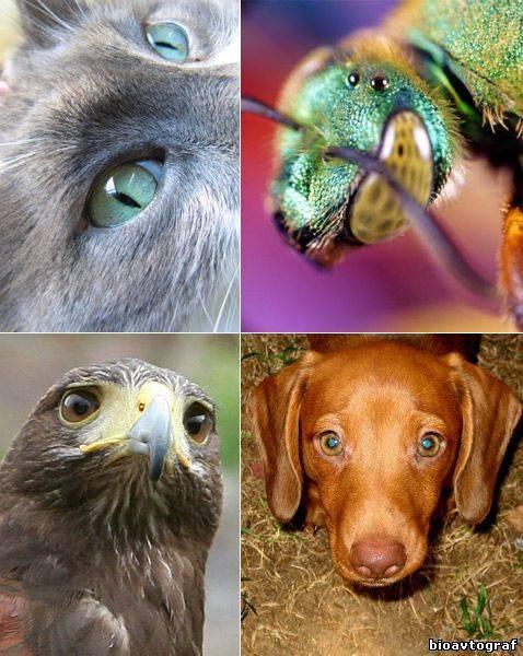 Как видят собаки: описание способностей и характеристик собачьего зрения