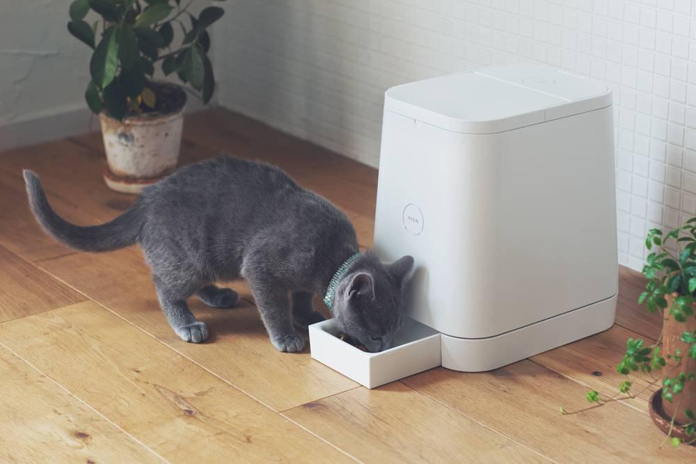 Как самостоятельно сделать автоматическую кормушку для кошки собственноручно