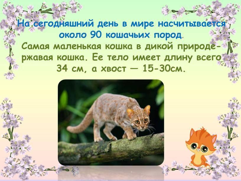 Если все кошки в мире исчезнут читать онлайн - гэнки кавамура  - knizhnik.org