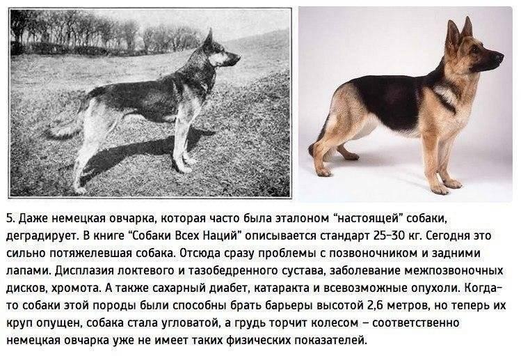 Описание и фотографии разных пород собак; названия, особенности поведения, повадки и советы по содержанию