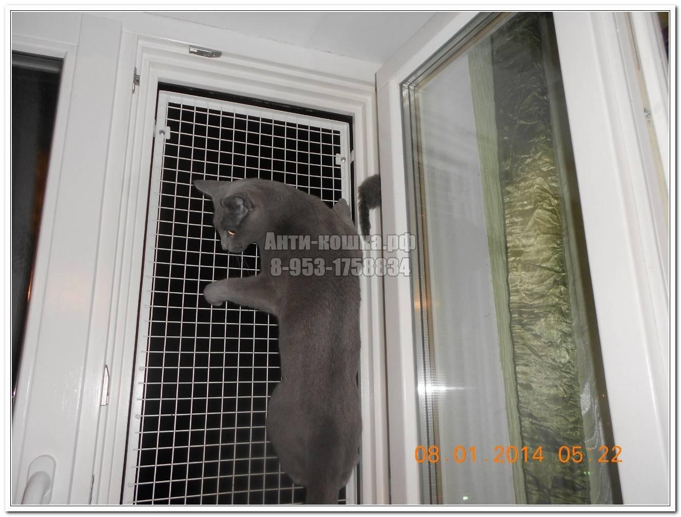 Как самому установить сетку антикошка на окно, простой способ защиты животного