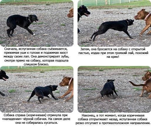 Беспокойное поведение собаки: причины и провоцирующие факторы
